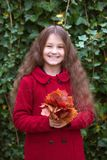 Smiling child holds a bouquet of autumn red leaves. Stock Photos