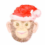Smiling Chimpanzee monkey in a Santa Claus hat. Royalty Free Stock Image