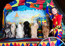 Smiling clown and 7 dogs Royalty Free Stock Image
