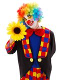 Clown with big yellow flower. Smiling clown in colorful wig posing with a big yellow flower stock images