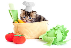 Smiling cook kitten with toy vegetables isolated Royalty Free Stock Image