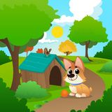 Smiling corgi sitting on path in park. Little bird on roof of dog s house. Playful pet with orange ball. Nature. Landscape with garden trees and green grass Royalty Free Stock Image