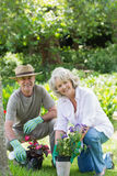 Smiling couple engaged in gardening Stock Images