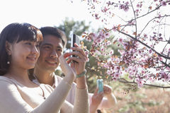 Smiling couple taking a photograph of a branch with cherry blossoms, outside in a park in the springtime royalty free stock photo