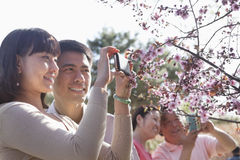 Smiling couple taking a photograph of a branch with cherry blossoms, outside in a park in the springtime Royalty Free Stock Image