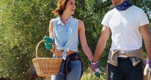 Smiling couple walking with wicker basket in farm 4k stock video