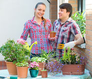 Smiling couple working with flowers Stock Images