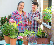 Smiling couple working with flowers Royalty Free Stock Image