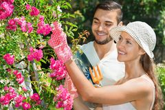 Smiling couple working in garden Royalty Free Stock Images