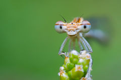 Smiling Damsel Royalty Free Stock Images