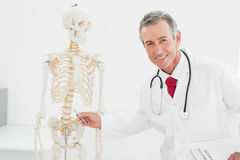 Smiling doctor explaining the spine in office Stock Photos
