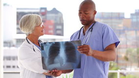 Smiling doctors examining a chest xray. In a bright room stock footage
