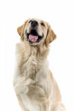 Smiling dog Royalty Free Stock Photography