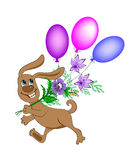 Smiling dog with a bouquet of flowers and balloons Royalty Free Stock Images