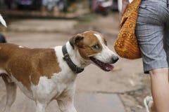 Smiling dog. Smiling cunning naughty dog street Stock Photo