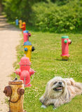 Smiling dog Fire hydrants Royalty Free Stock Photography