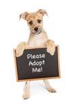 Smiling Dog Holding Adopt Me Sign Stock Image