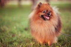 Smiling dog outdoors stock photos