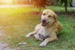 Smiling dog. And sunshine time stock photo