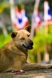 Smiling dog street on street hill Royalty Free Stock Photo