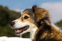 Smiling dog in the summer Stock Image