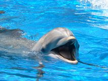 Smiling Dolphin Stock Images