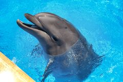 Smiling dolphin. dolphins swim in the pool Stock Photos