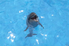 Smiling dolphin Stock Image