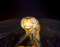 Smiling Dragonfly. Macro of a dragonfly's face and body Stock Photos