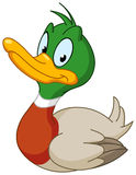 Smiling Duck Stock Photography