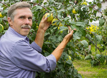 Smiling elderly man in the orchard Stock Image