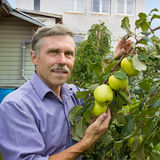 Smiling elderly man in an orchard Stock Photography
