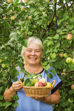 Smiling elderly woman in the garden with apples Royalty Free Stock Image
