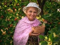 Smiling elderly woman wearing a hat in a garden collects berries. Elderly woman wearing a hat in a garden collects berries Royalty Free Stock Photo