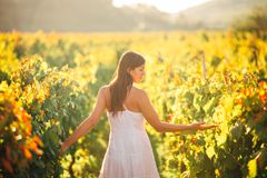 Smiling elegant woman in nature.Joy and happiness.Serene female in wine grape field in sunset.Wine growing field.Agricultural tour. Ism.Visiting winery and Stock Photos