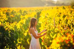 Smiling elegant woman in nature.Joy and happiness.Serene female in wine grape field in sunset.Wine growing field.Agricultural tour. Ism.Visiting winery and Royalty Free Stock Photos