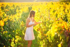 Smiling elegant woman in nature.Joy and happiness.Serene female in wine grape field in sunset.Wine growing field.Agricultural tour. Ism.Visiting winery and Royalty Free Stock Photography