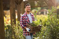 Garden Center Employee Royalty Free Stock Image
