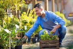 Garden Center Employee Stock Photos