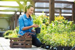 Woman working in garden center Royalty Free Stock Photo