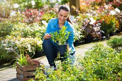 Woman working in garden center. Smiling employee in garden center royalty free stock image