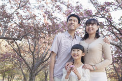 Smiling family looking up and admiring the cherry blossoms in the park in springtime, Beijing Stock Image