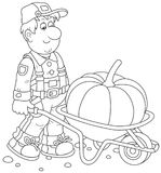 Gardener and Pumpkin. Smiling farmer carrying a big gourd in his barrow, a black and white vector illustration in a cartoon style for a coloring book Royalty Free Stock Photos