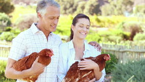 Smiling farmer couple holding chickens stock video
