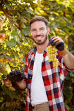 Smiling farmer harvesting the grapes. In vineyard Stock Photography