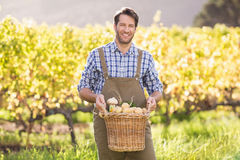 Smiling farmer holding a basket of potatoes Stock Photos