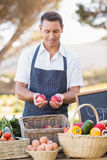 Smiling farmer holding two red apples Stock Photo