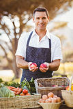 Smiling farmer holding two red apples Stock Photography