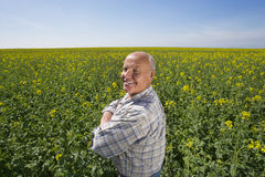 Smiling farmer standing with arms crossed in rape seed field Royalty Free Stock Photo