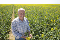 Smiling farmer standing in sunny rape seed field Stock Images